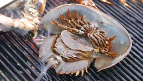 全球最古老的生物,马蹄蟹,在地球上生存数亿年了