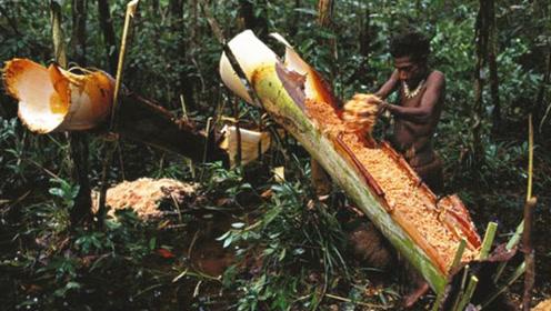 世界上最不正经的椰子树,从不长椰子,却养活了几百万人!
