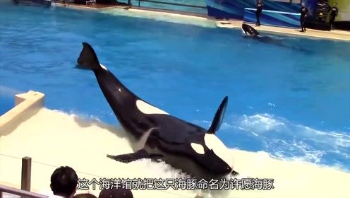 澳洲许愿海豚上市,每个愿望要花费千万资金?网友:真是土豪