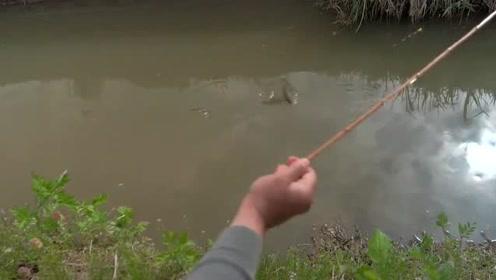 野河边钓鱼,高清摄影机拍下大板鲫上钩全过程,太刺激了