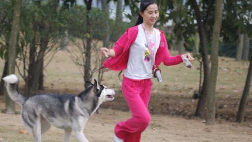 全球最大的狗每年花费超百万,美女为它不嫁人而奉献了自己的青春