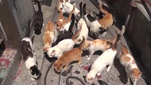 """日本名副其实的""""猫岛"""",猫的数量比人还多几倍,每年吸粉无数"""