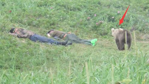 两男子在草地上睡着了,一头棕熊走了过来,是惊喜还是惊吓?