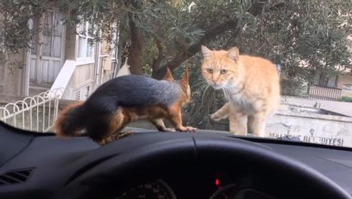 猫咪和松鼠隔窗相遇,互相看向对方,接下来请憋住不要笑!