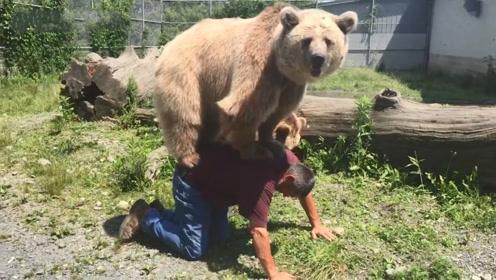 棕熊非要主人背背,主人:你那么大块头,十个我也背不动啊