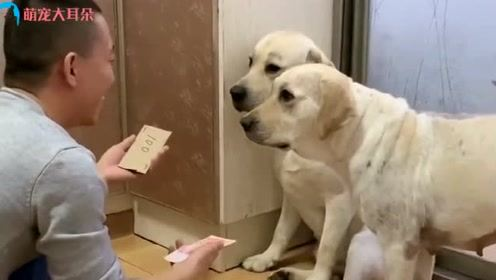 一百块钱考验了两只狗狗的智商,太为难狗狗了