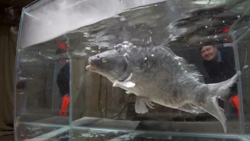 零下196度的液氮究竟有多厉害?看看这条鱼的下场,你就明白了