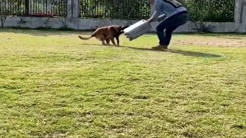 铲屎官要离家出走,接下来狗狗们的反应成精了,结局你忍住别笑!