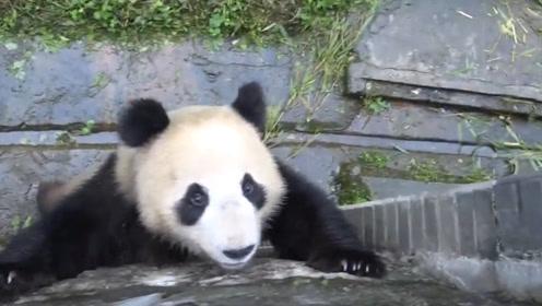 熊猫:越狱讲究天时地利,趁管理员不在的时候,看我一波神操作逃离出去