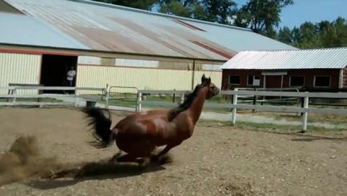 本以为这只马是摔倒了,没想到它从栅栏底钻了出去,网友:漂移