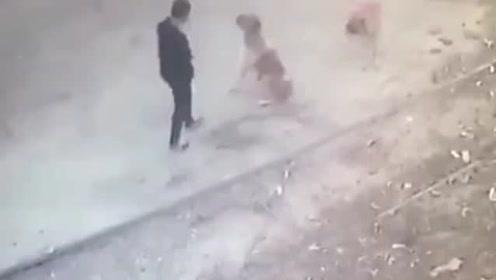 两只狗子街头围堵路人 没成想被男子打得一脸懵