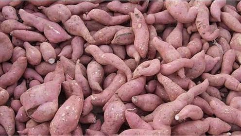 原来保存红薯方法这么简单,放半年不发霉变质,还越放越甜,真棒