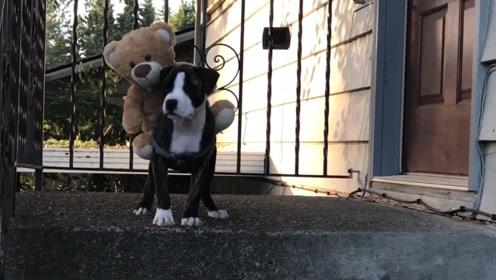 骑在狗狗身上的玩具熊,狗狗不管怎么对待它,就是不肯下来