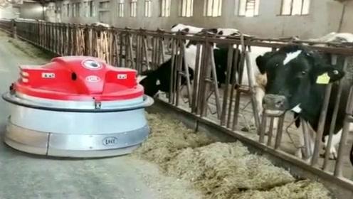自从买了自动化喂养机器,老板轻松多了,这钱花的真值!