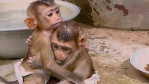 2只小猴子害怕洗澡,抱在一起互相安慰,这画面令人感动