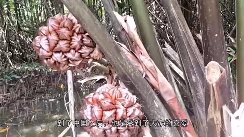 """外国人不吃的水果,却被中国人吃成""""三级保护植物"""",你们吃过吗"""