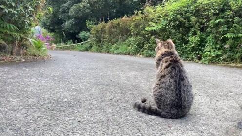 猫咪坐在路口,迎接柴犬回家,狗狗开心的乱了分寸