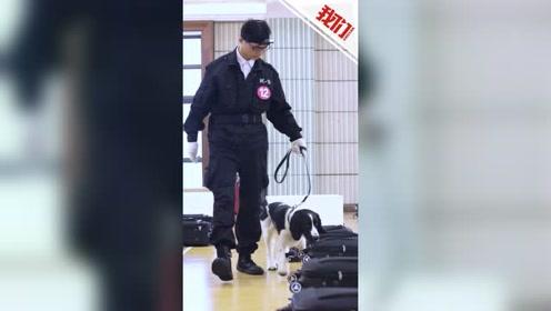 """流浪犬的逆袭之路:流浪史宾格偶遇训犬员 成功逆袭考上""""公务犬"""""""