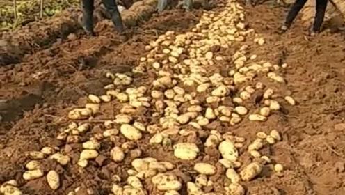 这就是农民的生活,每天面朝黄土背朝天,赚的钱还最少!