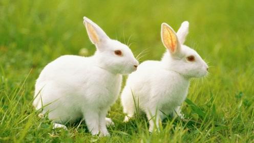 """属兔人注意了!你的""""大喜""""已送到,再忙也要打开迎接!"""