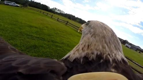 老鹰是这样看世界的!第一视角俯瞰真实坠落感,体验飞行的感觉