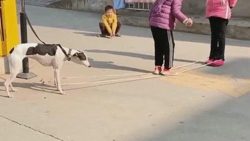狗子为这个家操碎了心,晚上负责看大门,白天还要陪着小主人玩游戏!