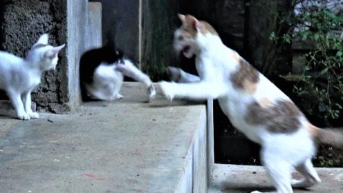 小猫长大后,为什么猫妈妈极其讨厌小猫呢?看完长知识了