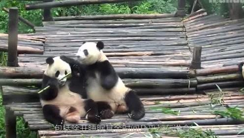 研究发现,熊猫难以消化竹子,熊猫的肠胃更适合食肉