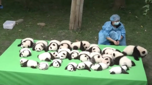 梦幻牧场养什么动物好_梦幻西游牧场养娃娃鱼还是熊猫_梦幻西游新牧场养熊猫