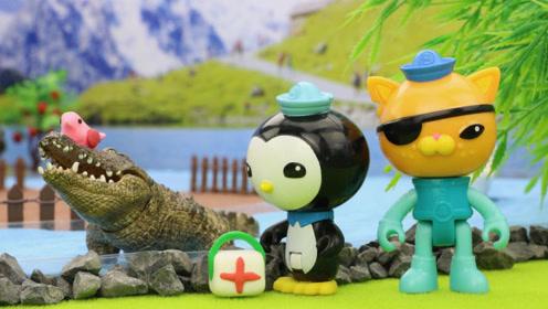 海底小纵队皮医生帮鳄鱼先生治疗牙疼,寻找与鳄鱼共栖的燕千鸟