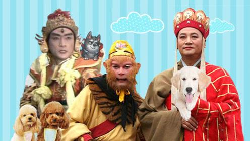 春节唐僧花光年终奖只为买条狗,悟空哭着要辞职!