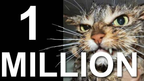 法国猫片 猫言猫语庆祝原UP一百万订阅噜