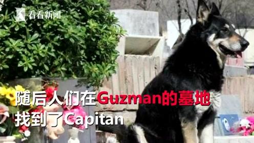 陪你到最后一刻 忠犬在主人墓前守护11年后去世