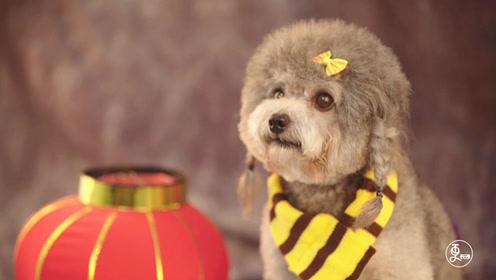 暖心!宠物摄影师免费给流浪狗美容拍写真,只为给它们找一个家