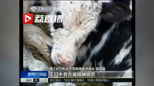 """几万分之一的概率!镇江""""超级牛妈""""生下三胞胎,真牛!"""