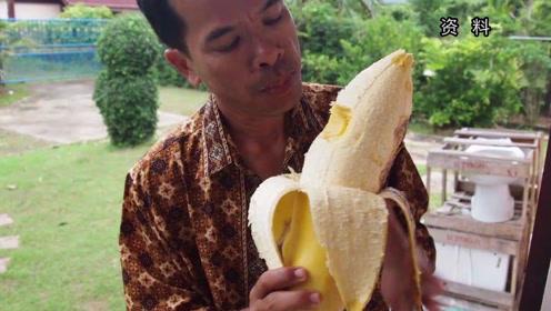 非洲某地每根成熟的香蕉约有四斤重,厉害了我的香蕉