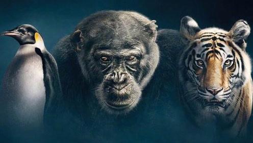 《王朝》饭制:猩球大战开启童年记忆 两分钟带你了解社会戴维哥