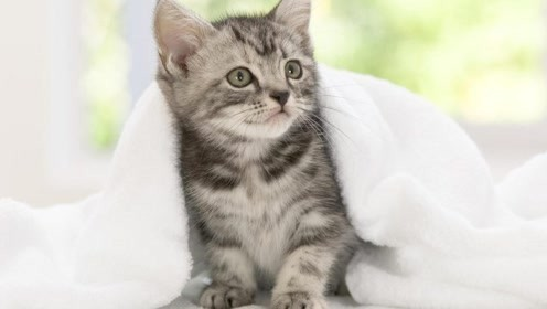 为什么猫一两年不洗澡,都不会臭?网友:自带清洁系统!