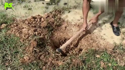 挖个大坑就能抓活鱼,真是太机智了!