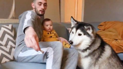 爸爸抱着宝宝喂哈士奇吃狗粮,爸爸小施伎俩就把二哈欺骗了