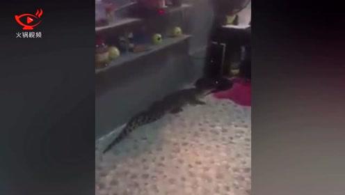 女子徒手活捉一米五长的鳄鱼 只为带回家自拍