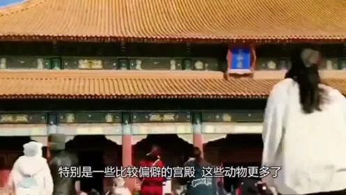 """为何故宫宫门每次打开时,工作人员都要喊一声""""我进来了""""!"""