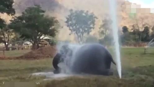 动物园水管破裂 大象上演水中最胖的顽皮孩子