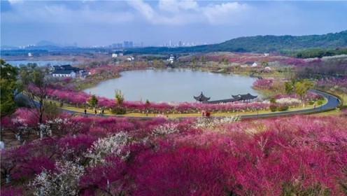 香山风景区 梅园