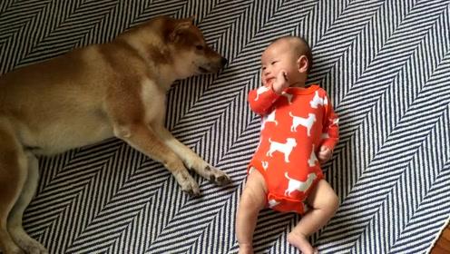 睡觉中的狗狗被小主人一拳打醒,但它的反击,实在是太暖了!