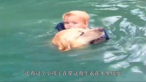 主人测试狗狗忠诚度,假装掉入水中,狗狗的表现让主人满意