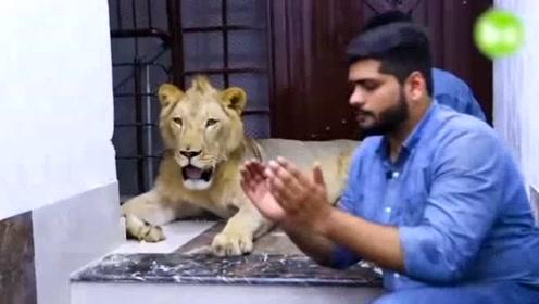 巴基斯坦男子养狮子当宠物:散步兜风还做发型
