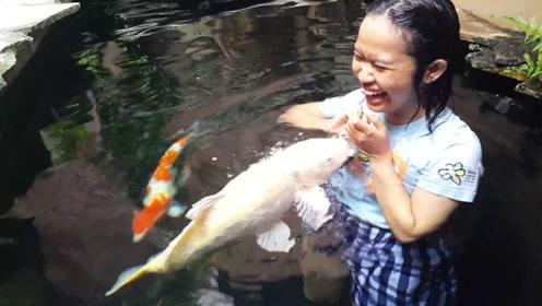 不怕人的锦鲤你们见过吗?锦鲤还会抢夺你的鱼食,据说能带来好运哦