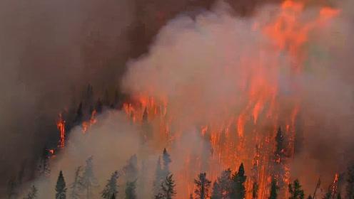 发生森林大火时,为什么不采用人工降雨灭火?这样就不会有人牺牲了