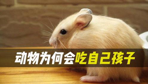 为什么动物们会吃掉自己的孩子?这在某种程度上是项成功的策略!